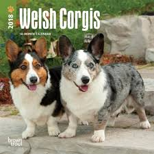Welsh Corgis
