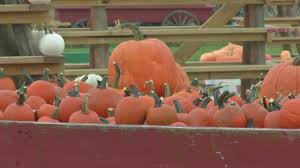 Clarence New York Pumpkin Farm by The Great Pumpkin Farm Preparing For Opening Weekend Youtube