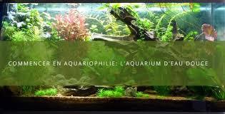aquarium d eau douce aquarium débutant créer aquarium d eau douce pour plantes et