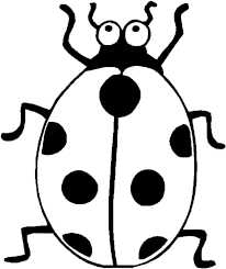 Picture Of A Ladybug To Color