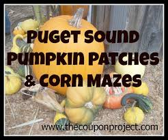 Pumpkin Patch Puyallup River Road by Pumpkin Patches And Corn Mazes For Puget Sound Area