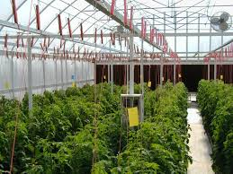 Growing Tomatoes Indoors Hydroponically, Controlled Environments ... Hydroponic Home Garden Backyard Food Solutionsbackyard Oc Aquaponics Project Admin What Is Learn About Aquaponic Plant Growing Photos Friendly Picture With Amusing Systems Grow 10x The Today Bobsc Ezgro Amazoncom Vertical Gardening Vegetable Tower Indoor Outdoor From Fish To Ftilizer Greenhouse Im In My City Back Yard Yes I Am Satuskaco
