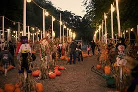 Piedmont Service Center Pumpkin Patch by 9 Sf Bay Area Pumpkin Patches U0026 Haunted Houses To Hit This