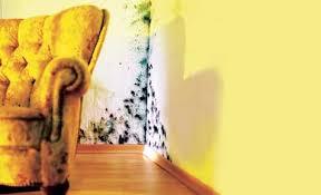 schimmel im schlafzimmer gründe beseitigung vorbeugung