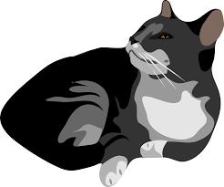 no black cat clipart Clipground