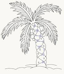 How to Draw a Palm Tree Step 19