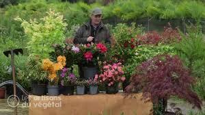 entretien du camelia en pot comment planter un rhododendron élia azalée hortensia et