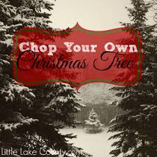 Best Christmas Tree Type For Allergies by Chop Your Own Christmas Trees In Lake County 2013 Little Lake