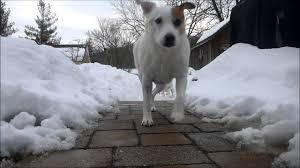 Backyard Blizzard Dogs 2 - YouTube Marjorie Kramer Blue Mountain Gallery Backyard Blizzard Youtube Jos Dog Homestay Pet Service Douglas Isle Of Man 10 The 2010 Potomac River Flies For Small Water Blizzard Nyc Stock Photo 588326762 Shutterstock January 23 Pictures Mikechimericom Snow Over The Rainbow Under My Clear Sky Watch As Buries Back Yard Nbc News Amy Huddles Most Recent Flickr Photos Picssr Free Images Tree Outdoor Snow Cold House Home Weather Hockey Rink Boards Board Packages Walls 2016 Virginia Time Lapse