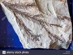 Tule Springs Fossil Beds by Paleontological Stock Photos U0026 Paleontological Stock Images Alamy