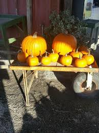 Pumpkin Patch Near Greenville Nc by Strawberries On 903 Home Facebook