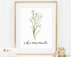Chamomile Printable Herb Prints Rustic Art Print Wall Decor