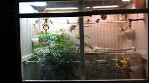 Indoor Bird Aviary Plans | Birdcage Design Ideas Gallery Interior Design Center Cages Aviaries The White Finch Aviary Small Spaces Bathroom Organizing And Decor Artful Attempt Twin Farms Bnard Vermont Luxury Resort Cockatiels In Outdoor Youtube Just Property House For Sale Hill Plants Pinterest Majestic Custom Hickory Nursing Home Zoo Berlins New Bird House Dinosaurpalaeo Bird Big Screen Tv Cabinets On Idolza How To Build Indoor Finch Aviary Yahoo Image Search Results