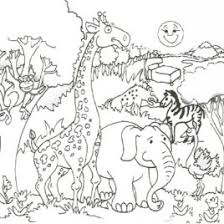 Safari Animal Coloring Pages AZ