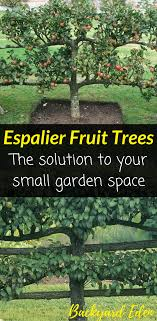 Espalier Fruit Trees - The Solution To Your Small Garden Space ... Backyard Farming Photo On Marvelous Fruit Trees Texas Plant A Tiny Orchard Hgtv Dwarf Peach Tree Peaches And Ctarines Pinterest 81 Best Pattern 170 Images On Garden And Berries In Small Mesmerizing 3 Fruit Trees For Small Space Yards Patios Youtube Backyards Gorgeous 135 Good For Yards Splendid Interesting Pics Decoration Inspiration Best To Grow Cool Glamorous Privacy Design 25 Ideas Patio