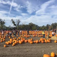 Pumpkin Patch San Jose 2015 by J E Perry Farms 129 Photos U0026 82 Reviews Fruits U0026 Veggies