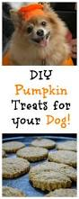Dog Constipation Treatment Pumpkin by Diy Pumpkin Dog Treats Delish Fall Treats For Your Dog U2022 Life