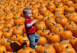 Grants Farm Halloween Events 2017 by Halloween Events In Bay Area Pumpkin Patches Haunted Attractions
