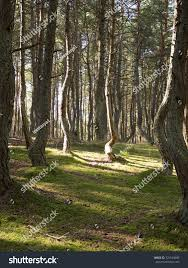 Russia Kaliningrad Region Curonian Spit Bent Stock Photo (Edit Now ... Expert Claims Mysterious Bent Trees Were Secret Native Americans Crooked Forest Wikipedia Stp77089 Greenery And Tree Trunks In Forest Karjat Mahashtra Indian Bent Trees History Or Legend Show Me Oz Larry The Lorry More Big Trucks For Children Geckos Garage New Trucks Bodies Equipment Trailers Seen At Wasteexpo How To Fix A Leaning Tree I Love The Wooden Beds Rarin To Go Ford Mysterious Are Actually American Trail Markers Wind Stock Images 542 Photos Bend Diamonds Ieee Spectrum Black White Alamy