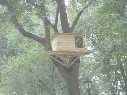 100 Modern Tree House Plans Designs Between 2 S
