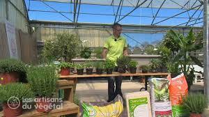 comment et quand planter du thym persil basilic menthe romarin