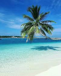 100 Rangali Resort Comrades Maldives Favorite Places Spaces In 2019