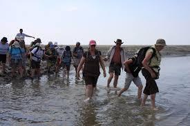 traversee mont michel traversée de la baie du mont michel à pied legrandtour