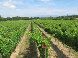 100 Ampurdan Winery For Sale In DO Alto Ampurdn