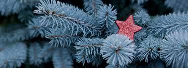 Fiber Optic Christmas Trees At Kmart by U S Capitol Christmas Tree Christmas Ideas