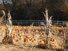 Valas Pumpkin Patch Campfire by Can It Be Fall Yet I Wanna Go Back To Vala U0027s Pumpkin Patch
