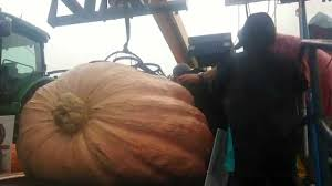 Atlantic Giant Pumpkin Record by Matt Mcconkie Breaks Utah Pumpkin Record 1 731lbs Youtube