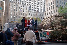 Christmas Tree Rockefeller Center Live Cam by Nyc Nyc 2012 Rockefeller Center Christmas Tree Arrives In