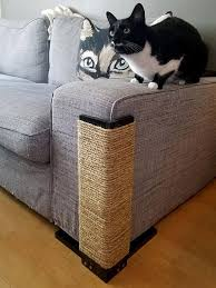 Microfiber Sofas And Cats by 25 Unique Protector Ideas On Diy Furniture