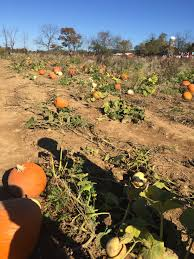 Pumpkin Picking Nj 2015 by Fall Family Fun At Ort Farms U2014 Denville Nj U2014 What U0027s Down In Town
