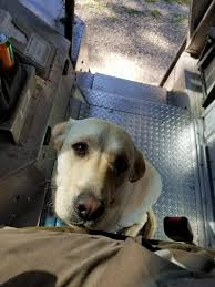 Some Recent Posts From UPS Dogs - Album On Imgur Big Data Case Study How Ups Is Using Analytics To Improve Fedex And Agree On The Truck Situation Wsj Leaked Photos Show Oklahoma City Driver Having Sex In Truck 20 21 Inch Toilet By Convient Height Ada Tall Comfort Now Lets You Track Packages For Real An Actual Map The Verge Amazon Rolls Out Delivery Vans Compete With Time Union Touts Tentative Deal Transport Topics Your Wishes Delivered Driver A Day Youtube Seeks Ease Ties With Showcases New Drone Fucks Up Paves Way Better Service Faster Development Vs Part 3 Differences Between Networks Idrive Logistics