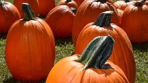 Piedmont Pumpkin Patch by What U0027s The Deal With Methodists And Pumpkins