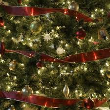 Longest Lasting Christmas Tree by The Green Christmas Tree Tips And Alternatives Metaefficient