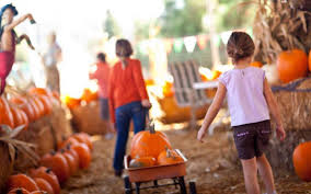 Pumpkin Patch Pasadena Tx by 100 Pumpkin Patch North Dallas Tx Pumpkins On The Plaza And