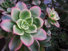 Hollycrest Bed And Biscuit by Mediterranean Gardening Ideas For Northern Alabama Hollycrest