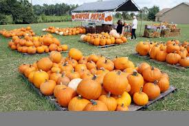 Tallahassee Pumpkin Patch by Calendar In October Filled With Fall Festivals Events Tbo Com