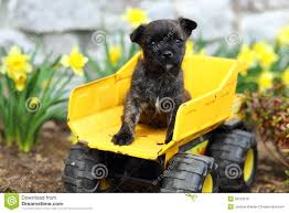 Adorable Puppy Sitting On Toy Truck Stock Photo - Image: 39783516 Seven Doubts You Should Clarify About Animal Discovery Kids Thomas Wood Park Set By Fisher Price Frpfkf51 Toys Amazoncom Push Pull Games Nothing Can Stop The Galoob Nostalgia Toy Truck Drive Android Apps On Google Play Jungle Safari Animal Party Jeep Truck Favor Box Pdf New Blaze And The Monster Machines Island Stunts Fisherprice Little People Zoo Talkers Sounds Nickelodeon Mammoth Walmartcom Adorable Puppy Sitting On Stock Photo Image 39783516 Planet Dino Transport R Us Australia Join Fun Wooden Animals Video For Babies Dinosaurs