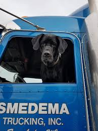100 Road Dog Trucking Winners Of The 2018 Cutest Furry CoPilot Contest