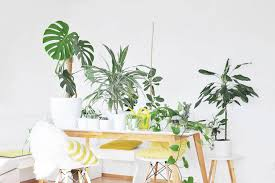 die besten zimmerpflanzen für die wohnung bonny und kleid