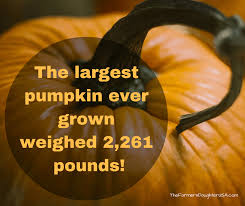 Largest Pumpkin Ever Carved by Largest Pumpkin Ever The Farmer U0027s Daughter Usa