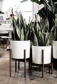 pin meda collier auf plantas wohnzimmer pflanzen