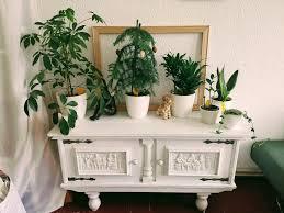 neue pflanzenecke im wohnzimmer langsam wird es eng