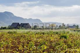 Landscape Of Tobacco Fields And Drying Houses Near Vinales Cuba Stock Photo