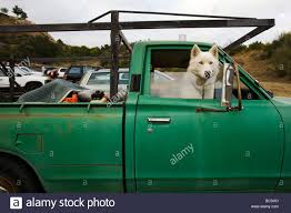 White Siberian Husky In A Truck Stock Photo: 24666209 - Alamy Gmbuickchevroletford Trucksuvmud Grabbers 275 Inch Wide Black Siberian Husky License Plate For Car Truck Motorcycle Or Etsy Husky 618 In X 205 157 Alinum Compact Low Profile White A Stock Photo 24666209 Alamy Whbeater 2nd Row Floor Liner 072015 Jeep Collection Of At Homedepot Rhdecpotcom Truck Neighborhood The Green Greek Representative Group Lets 13 Guy Warrior Sand Tompouce6 Flickr Wheel Well Liners 2016 F150 Youtube Regarding For Mercedes Bevertail Recovery 1 Owner Lk900 817 814 813 Henley 8 Forklift Fork Lift Only 6000 Operating Hours