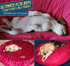 Bean Bag Dog Bed