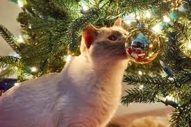 Aspirin Keep Christmas Trees Alive by 8 Steps To Cat Proof And Dog Proof Your Christmas Tree